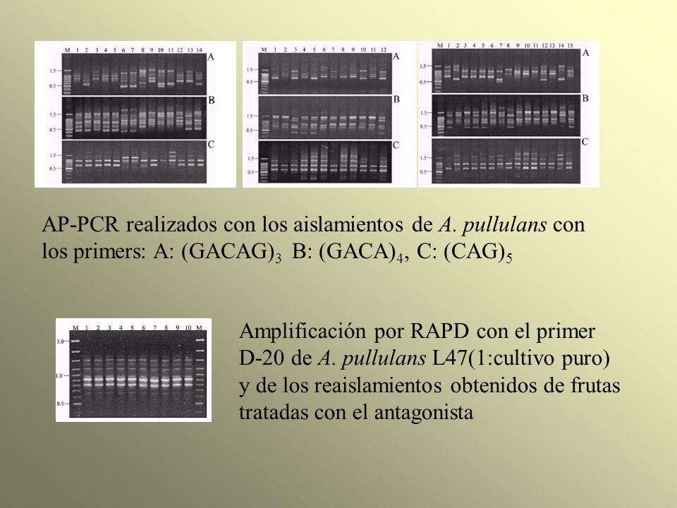 AP-PCR realizados con los aislamientos de A