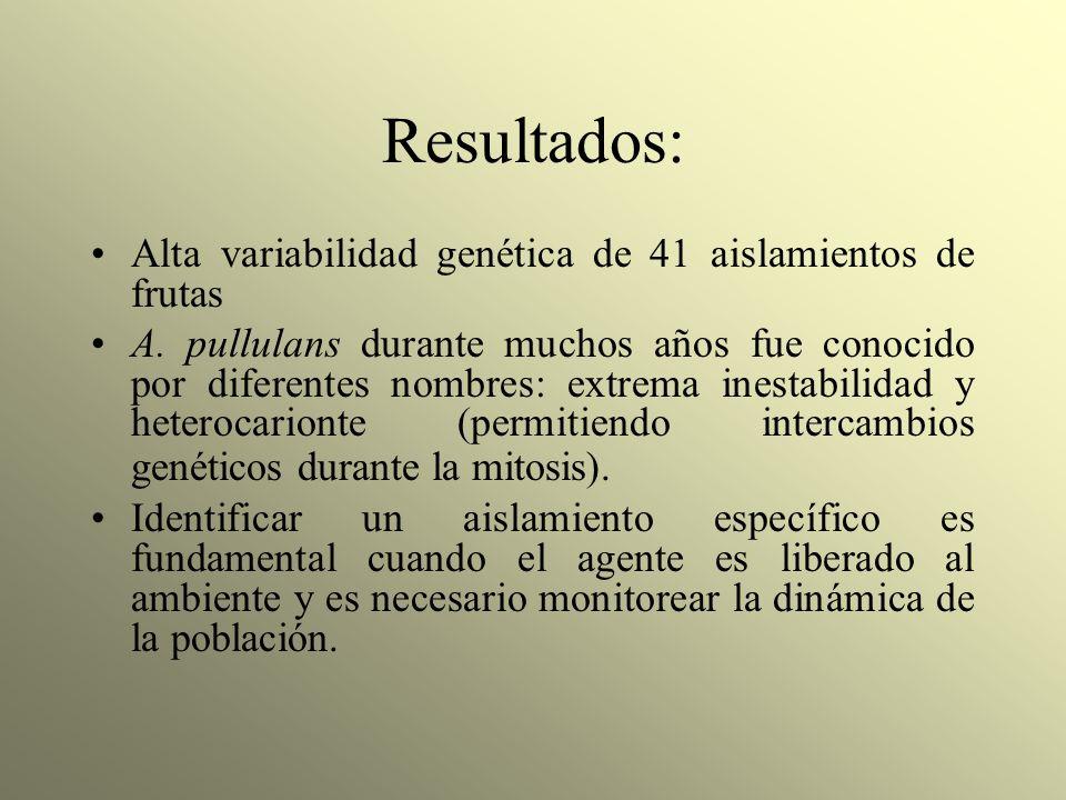 Resultados: Alta variabilidad genética de 41 aislamientos de frutas