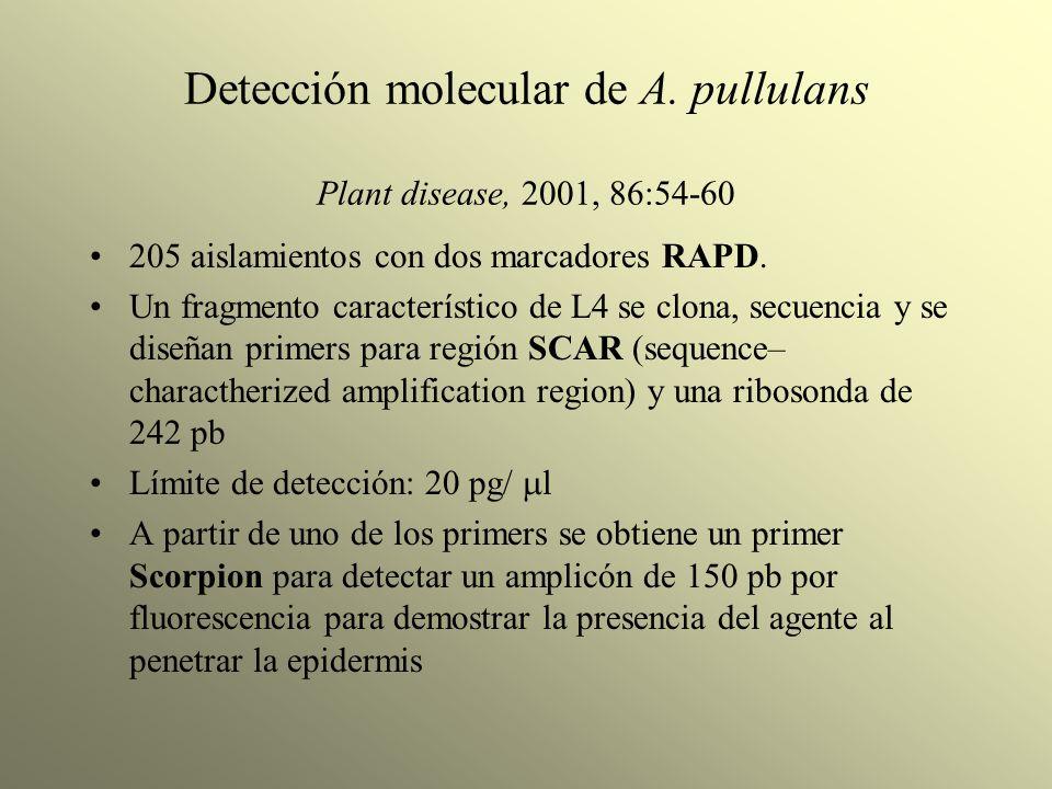 Detección molecular de A. pullulans Plant disease, 2001, 86:54-60