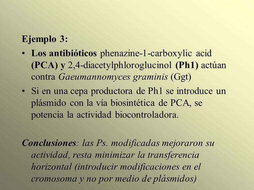 Ejemplo 3: Los antibióticos phenazine-1-carboxylic acid (PCA) y 2,4-diacetylphloroglucinol (Ph1) actúan contra Gaeumannomyces graminis (Ggt)
