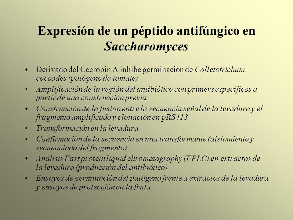 Expresión de un péptido antifúngico en Saccharomyces