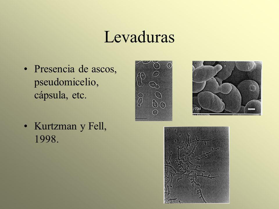 Levaduras Presencia de ascos, pseudomicelio, cápsula, etc.