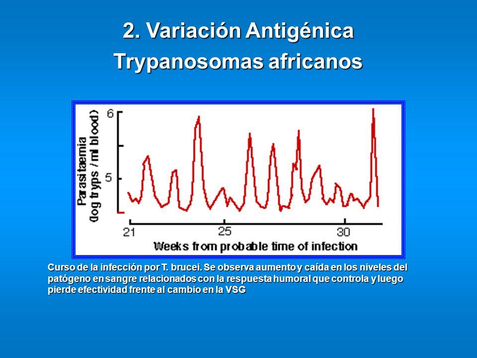 Trypanosomas africanos