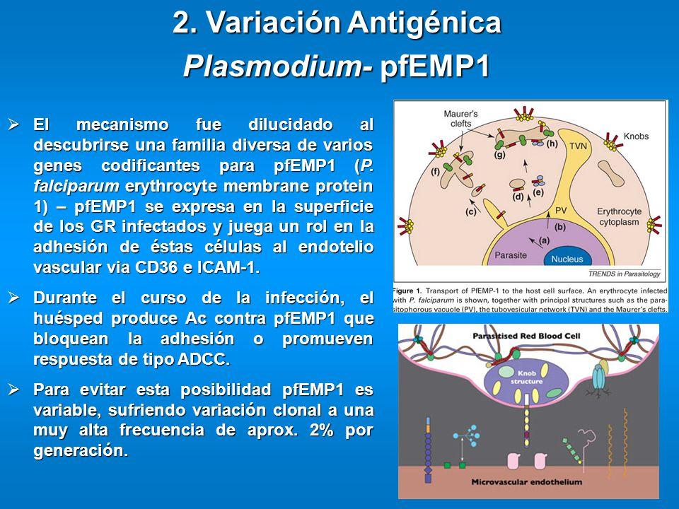 2. Variación Antigénica Plasmodium- pfEMP1