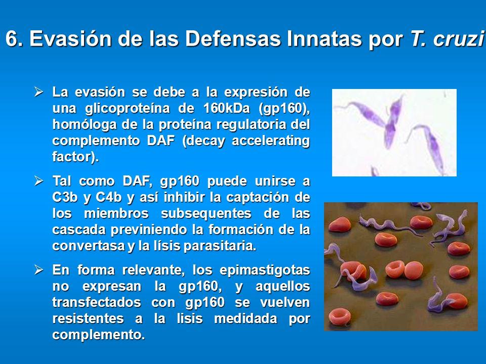 6. Evasión de las Defensas Innatas por T. cruzi