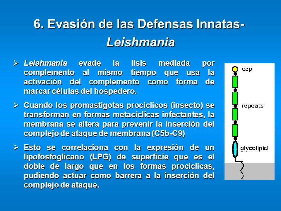 6. Evasión de las Defensas Innatas-