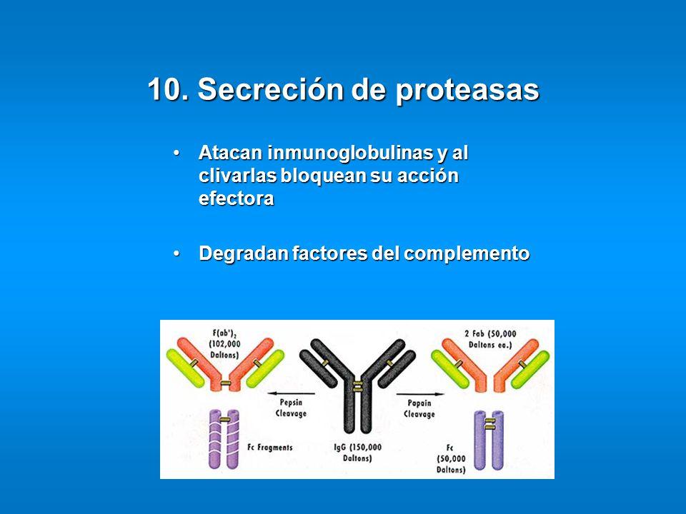 10. Secreción de proteasas