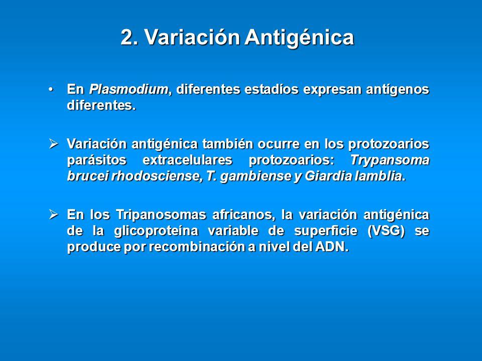2. Variación Antigénica En Plasmodium, diferentes estadíos expresan antígenos diferentes.