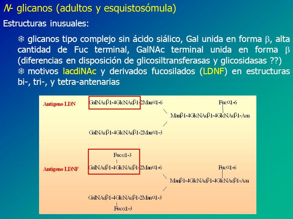 N- glicanos (adultos y esquistosómula)