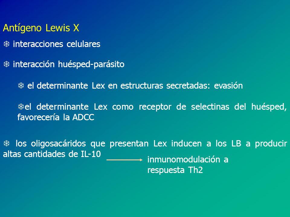 Antígeno Lewis X interacciones celulares interacción huésped-parásito