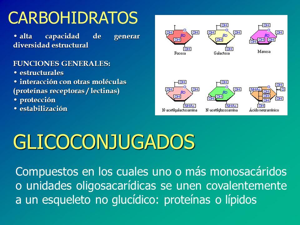 GLICOCONJUGADOS CARBOHIDRATOS