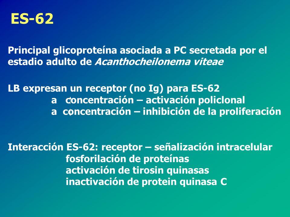 ES-62 Principal glicoproteína asociada a PC secretada por el estadio adulto de Acanthocheilonema viteae.