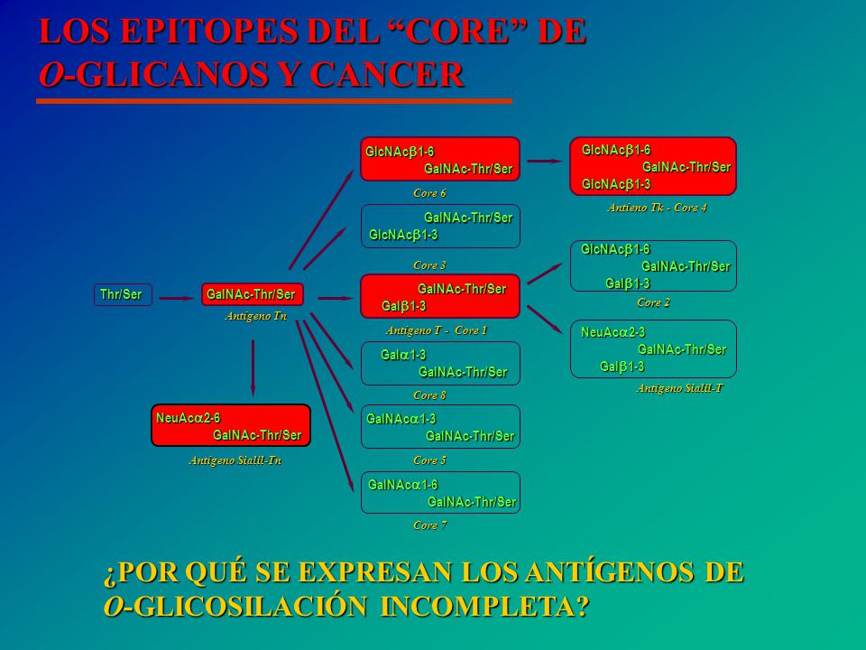 LOS EPITOPES DEL CORE DE O-GLICANOS Y CANCER