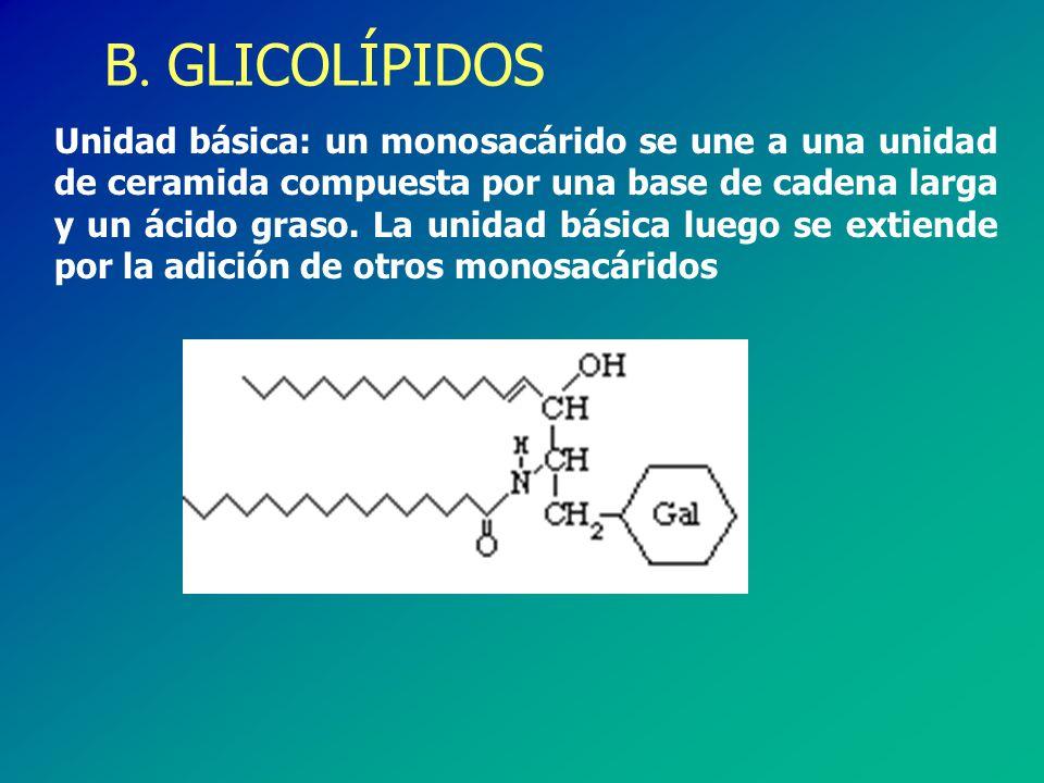 B. GLICOLÍPIDOS