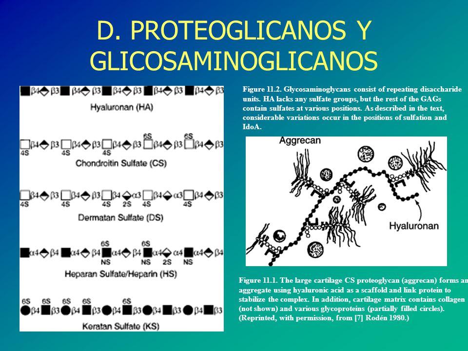 D. PROTEOGLICANOS Y GLICOSAMINOGLICANOS