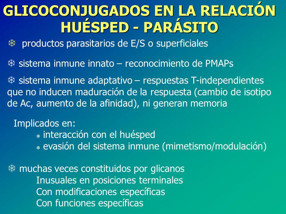 GLICOCONJUGADOS EN LA RELACIÓN HUÉSPED - PARÁSITO