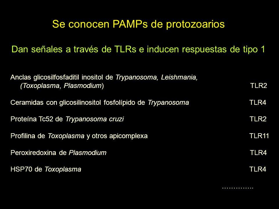 Se conocen PAMPs de protozoarios Dan señales a través de TLRs e inducen respuestas de tipo 1