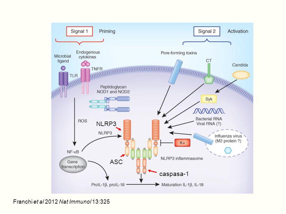 NLRP3 ASC caspasa-1 Franchi et al 2012 Nat Immunol 13:325