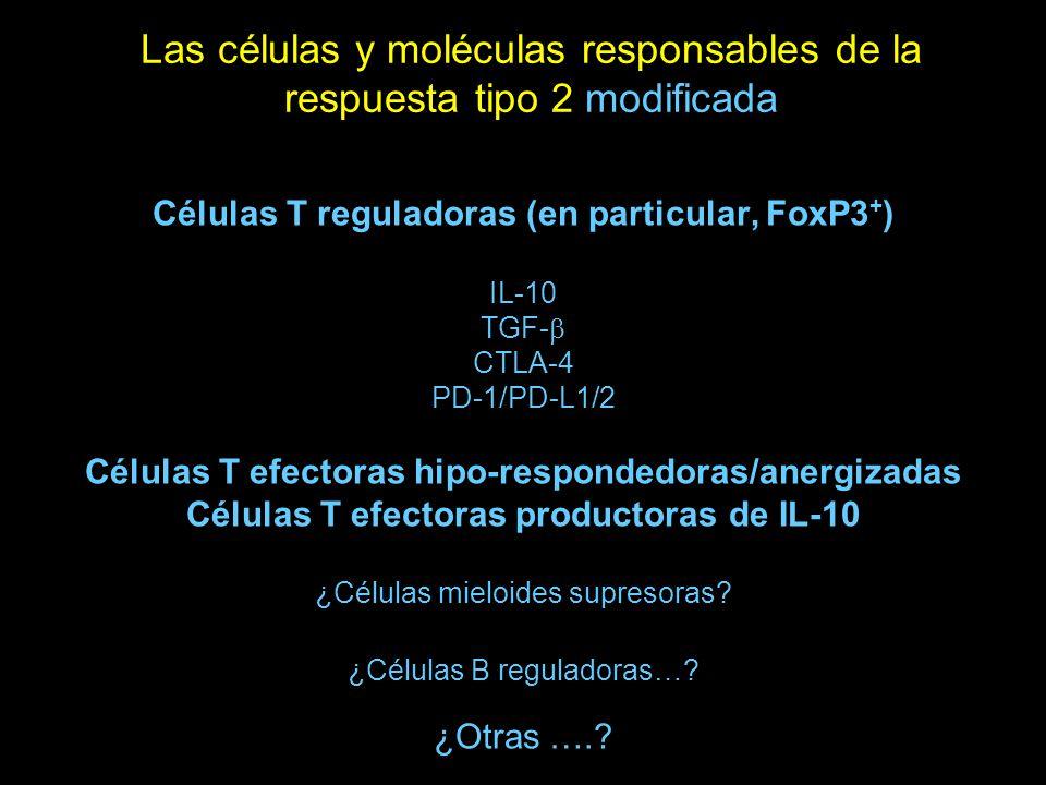 Las células y moléculas responsables de la respuesta tipo 2 modificada