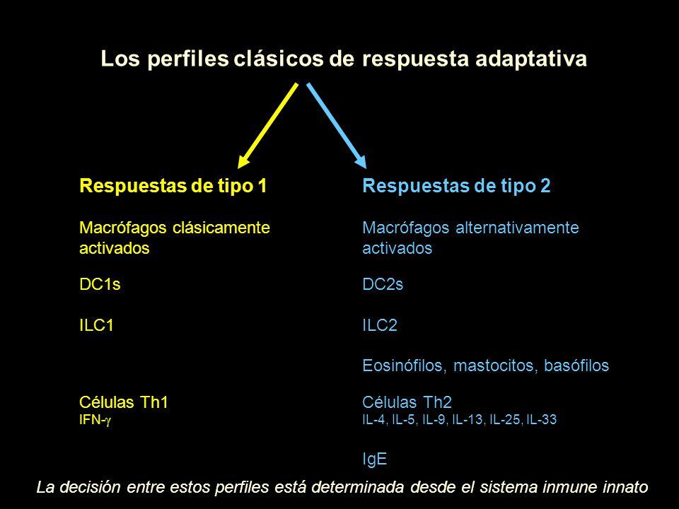 Los perfiles clásicos de respuesta adaptativa