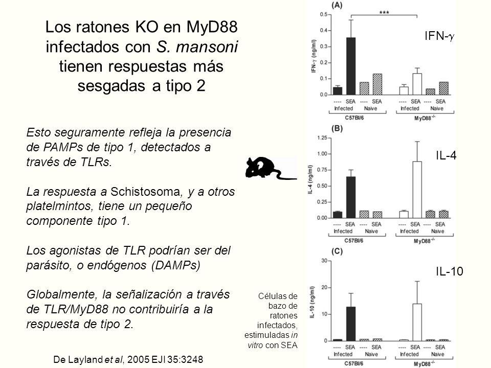 Los ratones KO en MyD88 infectados con S