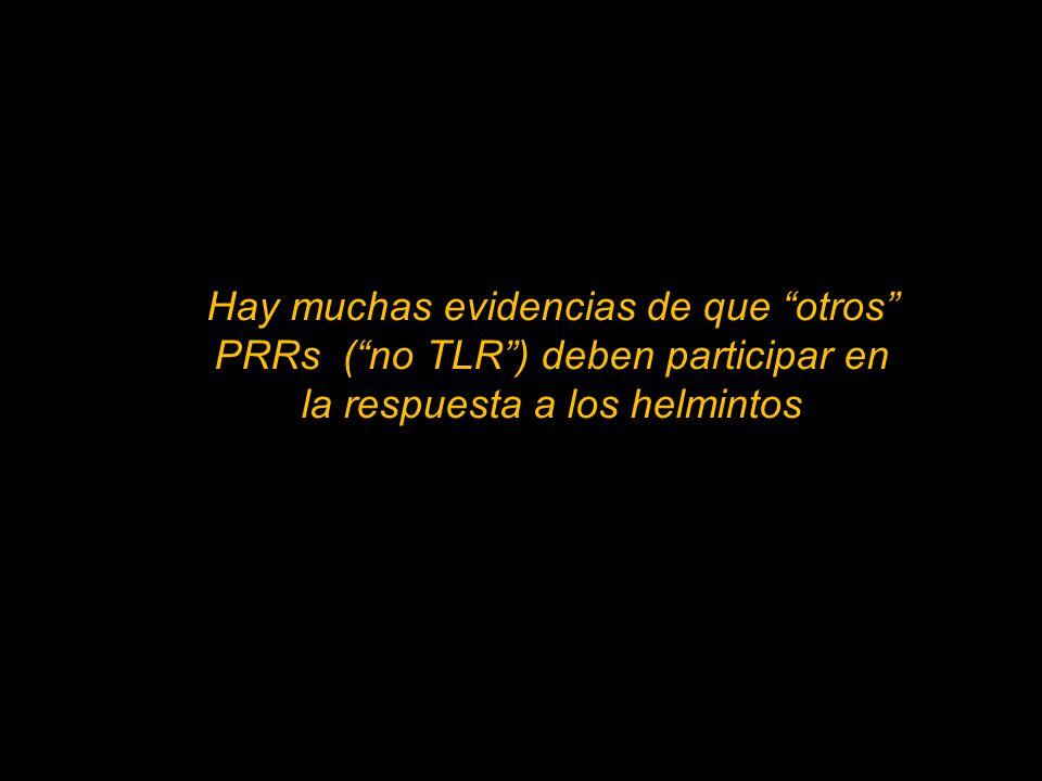 Hay muchas evidencias de que otros PRRs ( no TLR ) deben participar en la respuesta a los helmintos