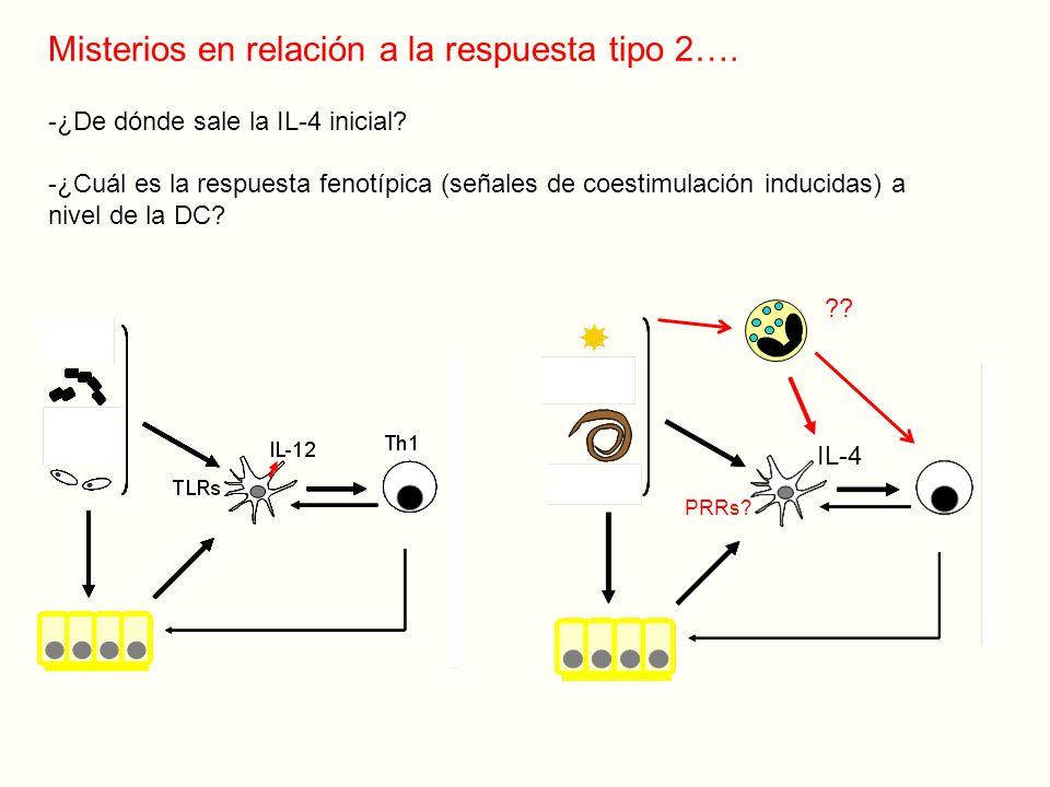 Misterios en relación a la respuesta tipo 2….