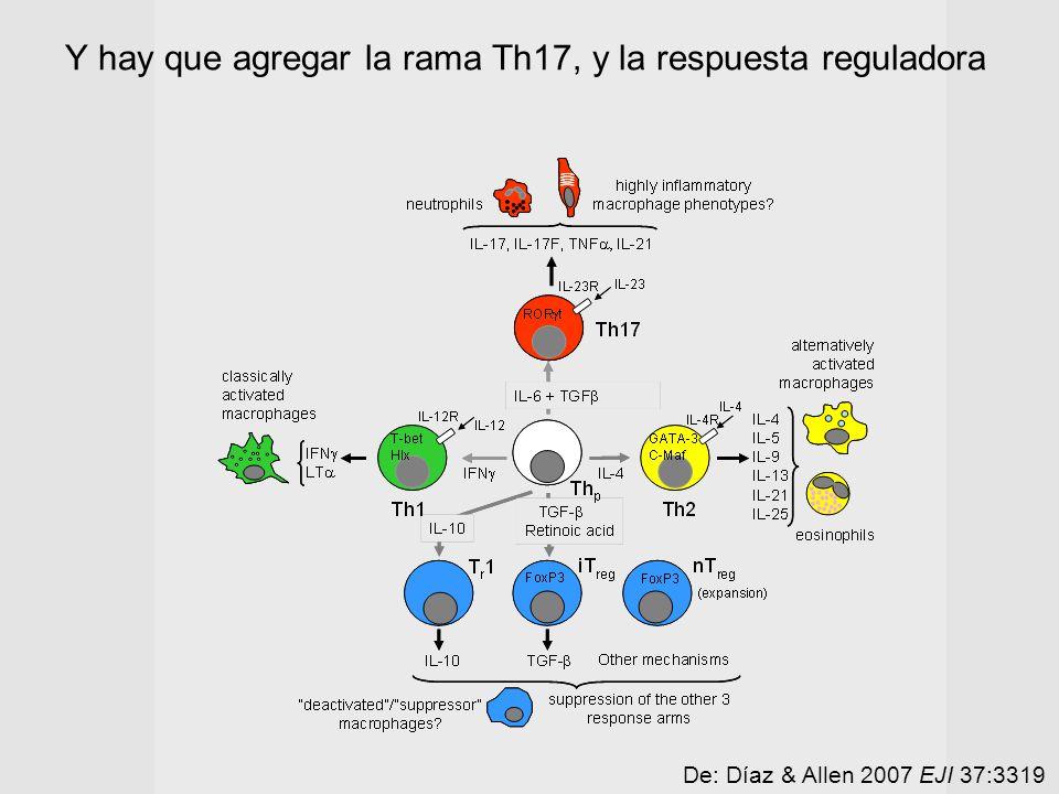 Y hay que agregar la rama Th17, y la respuesta reguladora