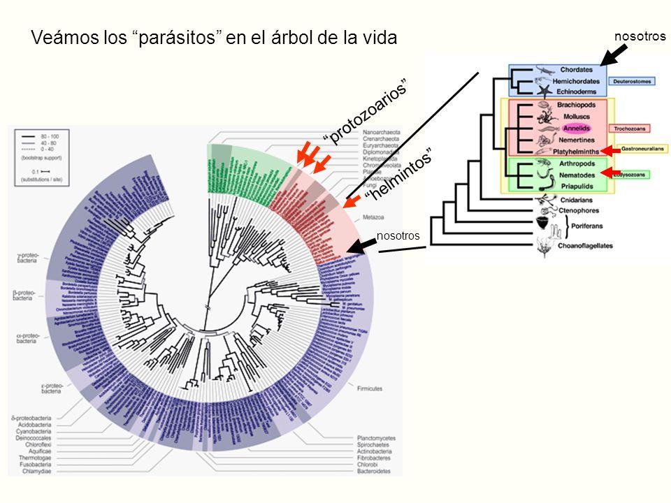 Veámos los parásitos en el árbol de la vida