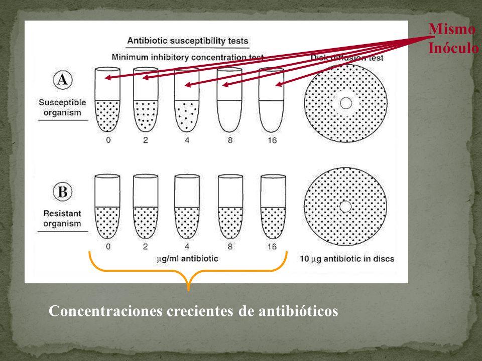 Mismo Inóculo Concentraciones crecientes de antibióticos