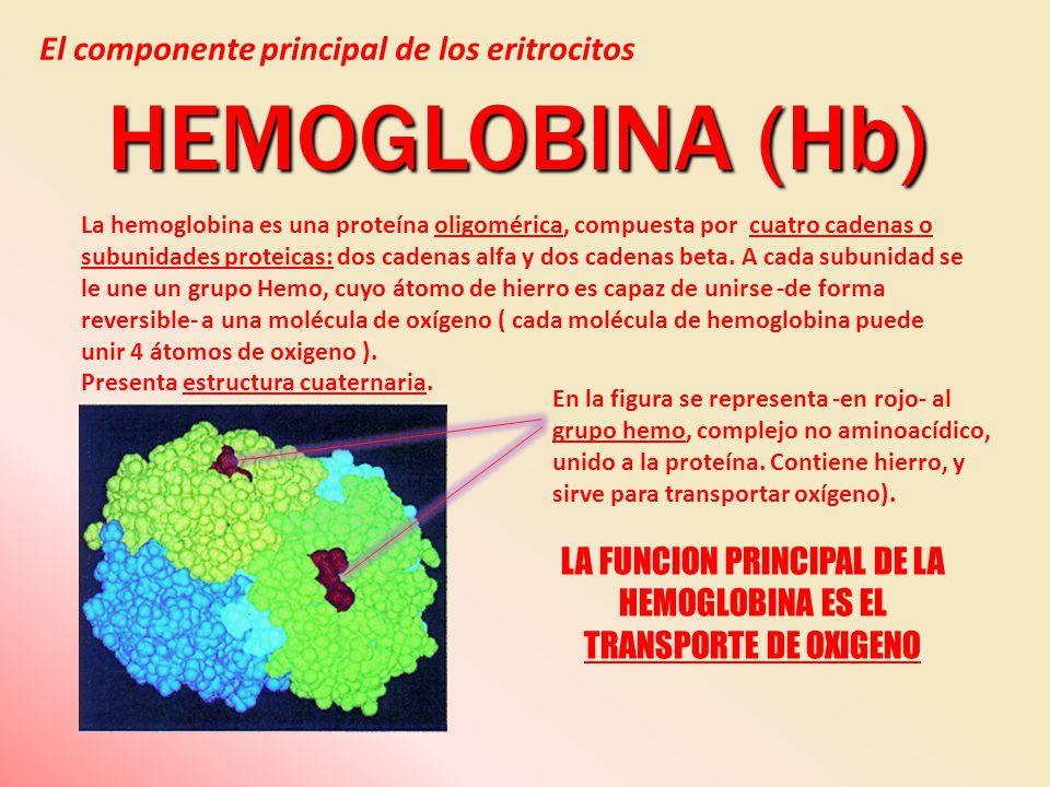 LA FUNCION PRINCIPAL DE LA HEMOGLOBINA ES EL