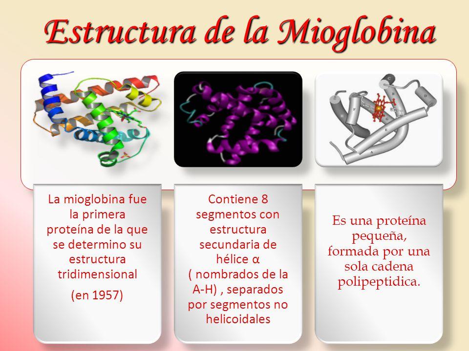 Estructura de la Mioglobina