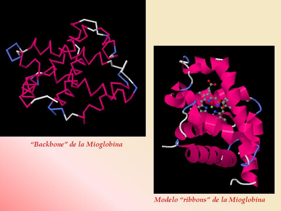 Backbone de la Mioglobina