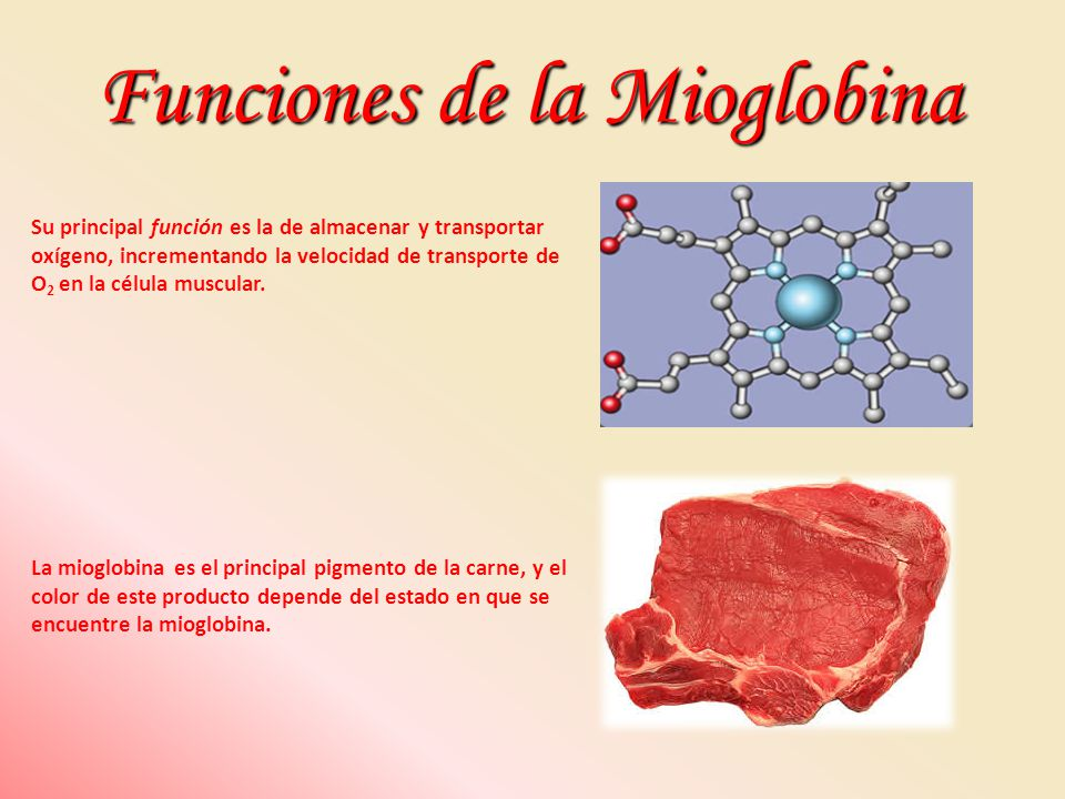 Funciones de la Mioglobina