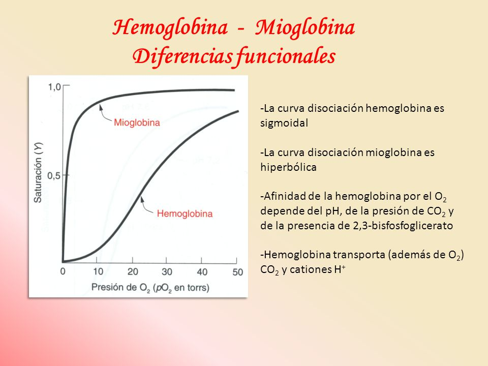 Hemoglobina - Mioglobina Diferencias funcionales