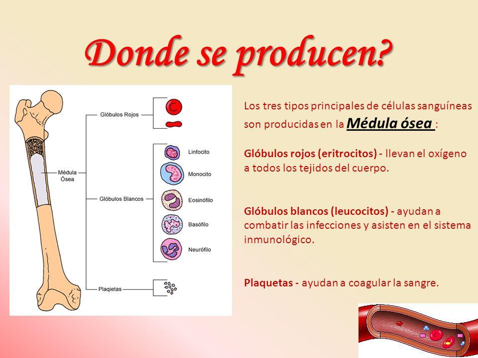 Donde se producen Los tres tipos principales de células sanguíneas son producidas en la Médula ósea :