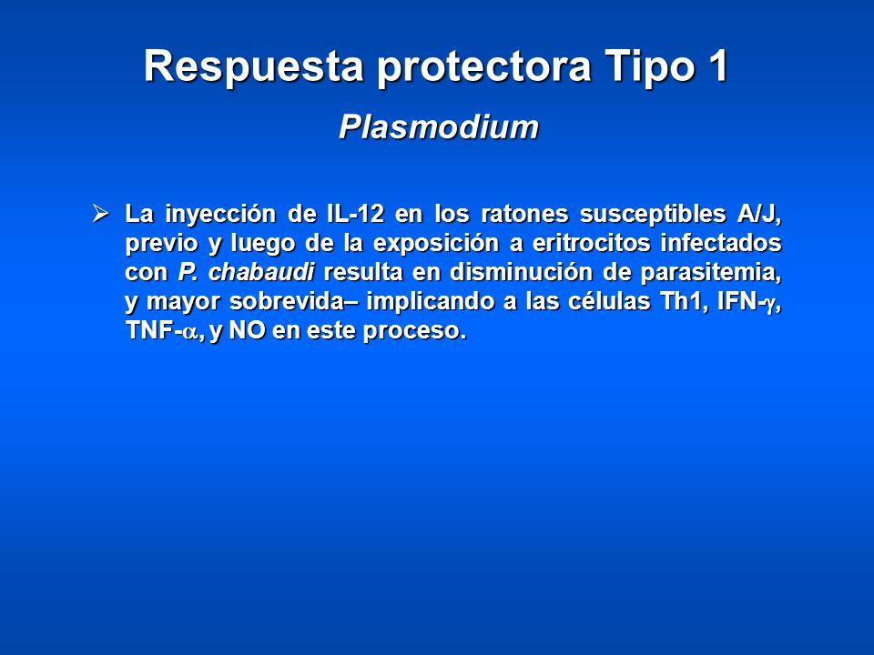 Respuesta protectora Tipo 1