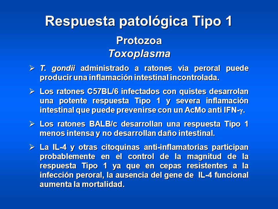 Respuesta patológica Tipo 1