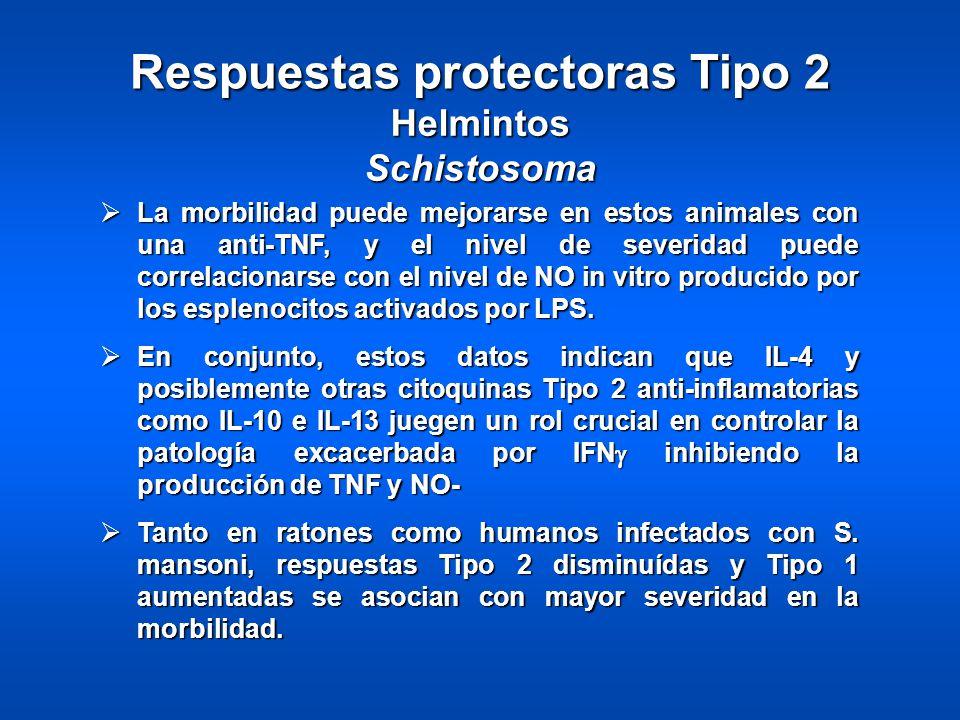 Respuestas protectoras Tipo 2