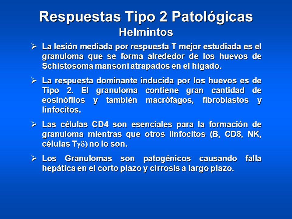 Respuestas Tipo 2 Patológicas