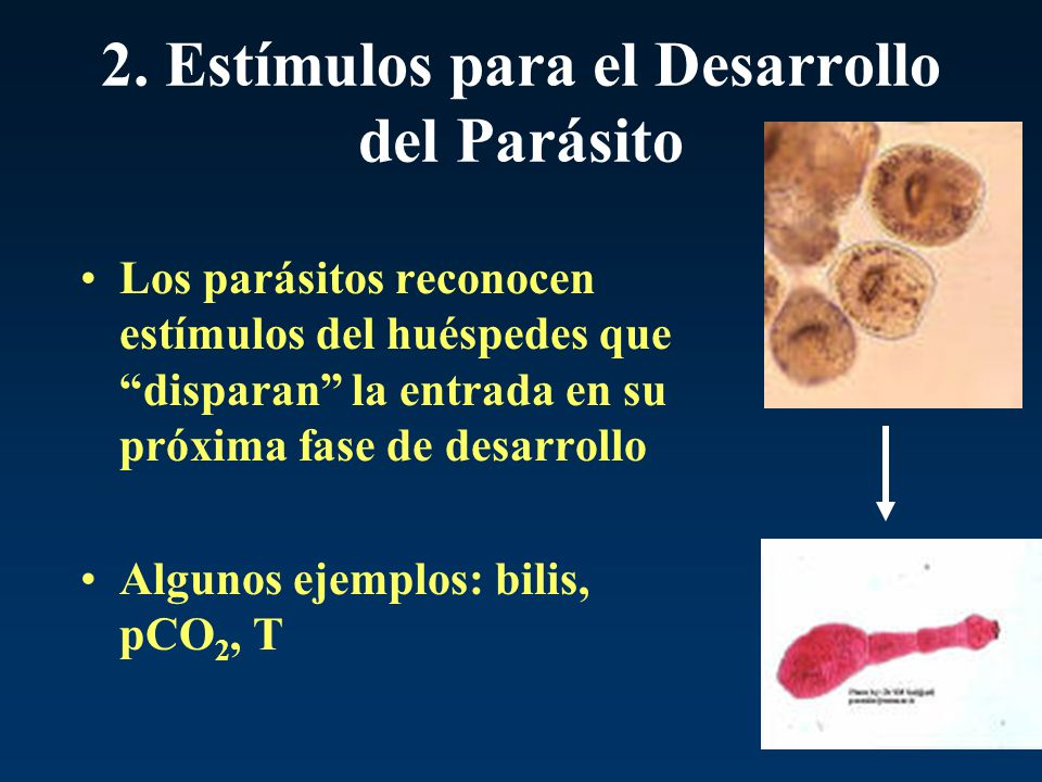 2. Estímulos para el Desarrollo del Parásito