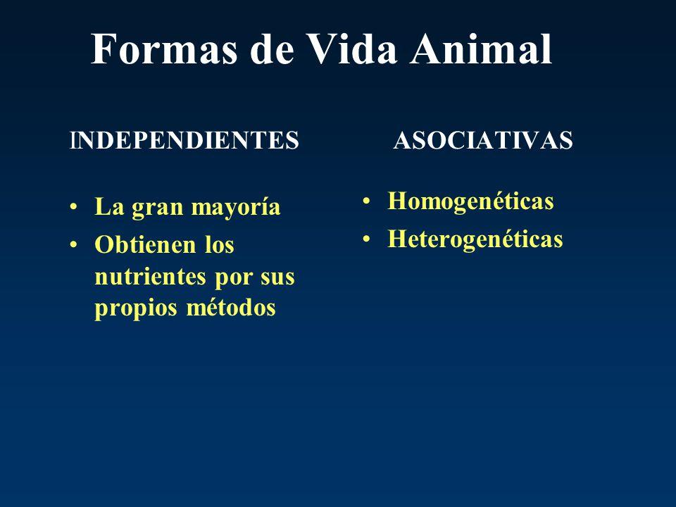 Formas de Vida Animal INDEPENDIENTES ASOCIATIVAS