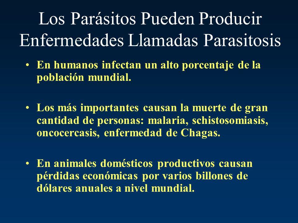 Los Parásitos Pueden Producir Enfermedades Llamadas Parasitosis