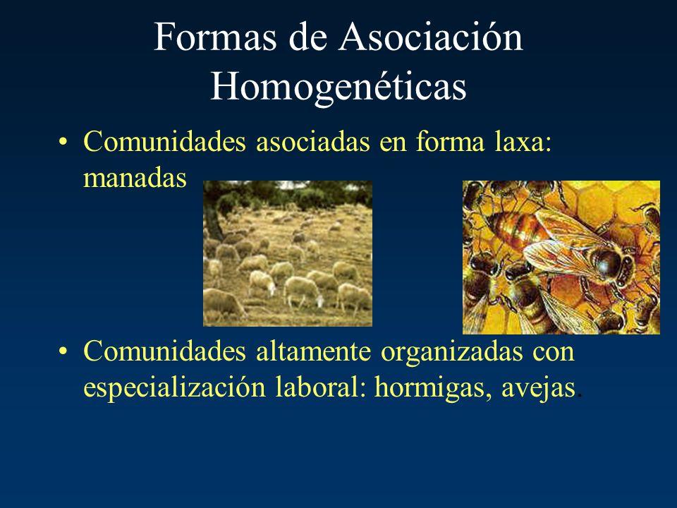 Formas de Asociación Homogenéticas