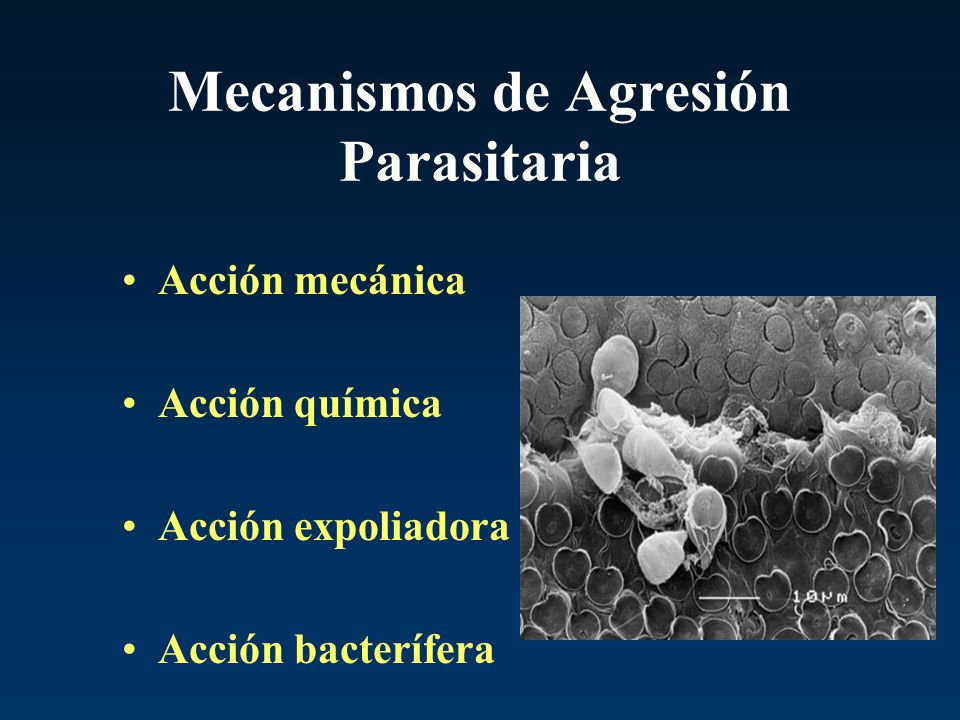 Mecanismos de Agresión Parasitaria