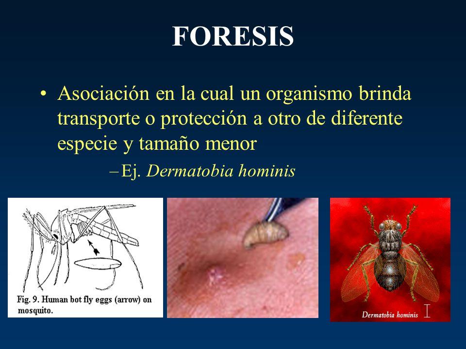 FORESIS Asociación en la cual un organismo brinda transporte o protección a otro de diferente especie y tamaño menor.