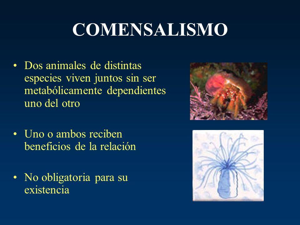COMENSALISMO Dos animales de distintas especies viven juntos sin ser metabólicamente dependientes uno del otro.