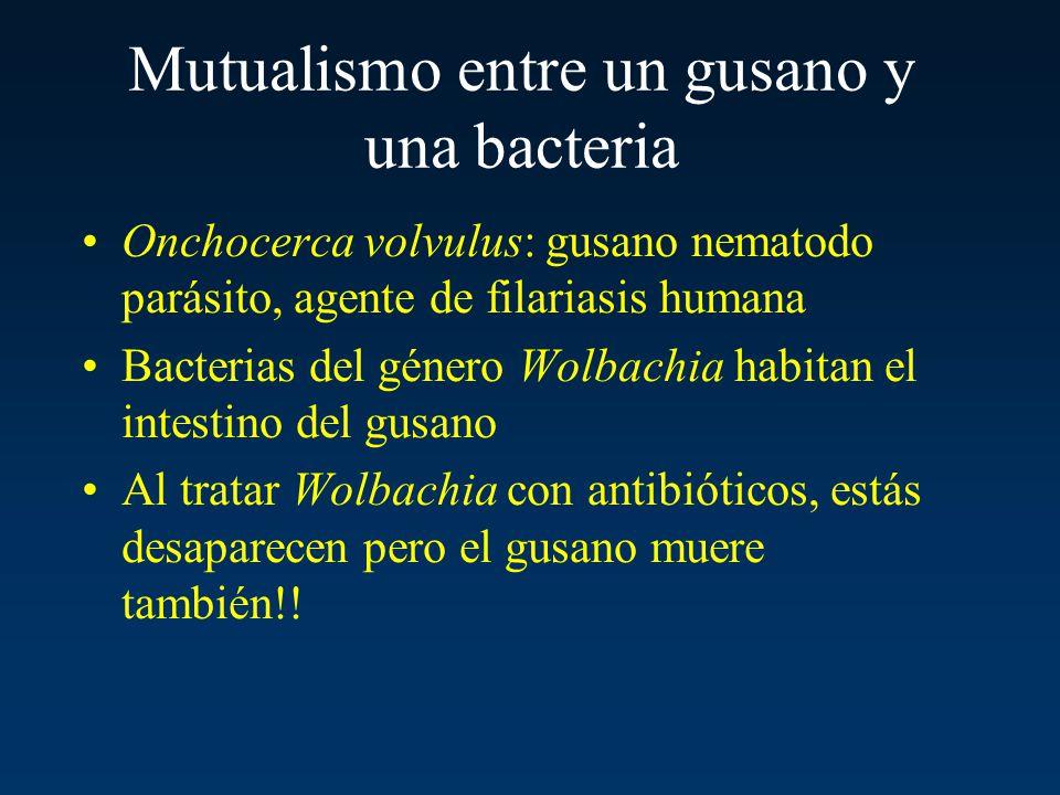 Mutualismo entre un gusano y una bacteria