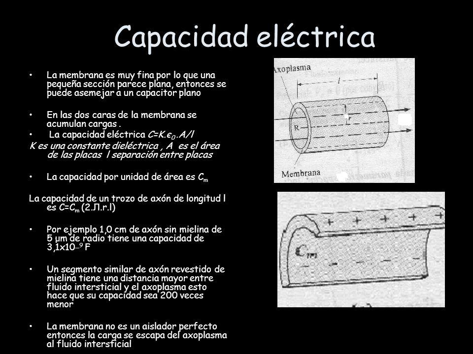 Capacidad eléctrica La membrana es muy fina por lo que una pequeña sección parece plana, entonces se puede asemejar a un capacitor plano.