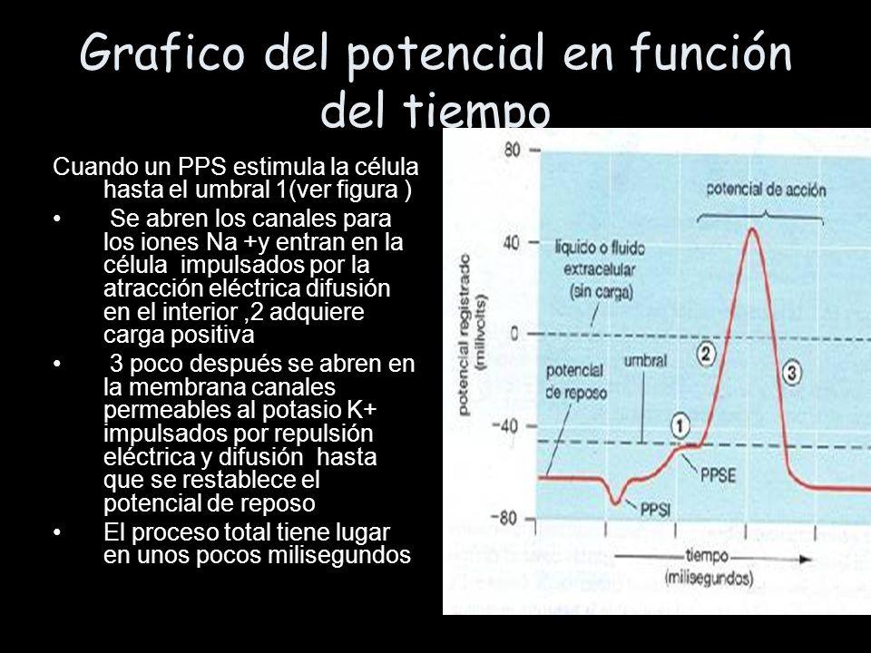 Grafico del potencial en función del tiempo